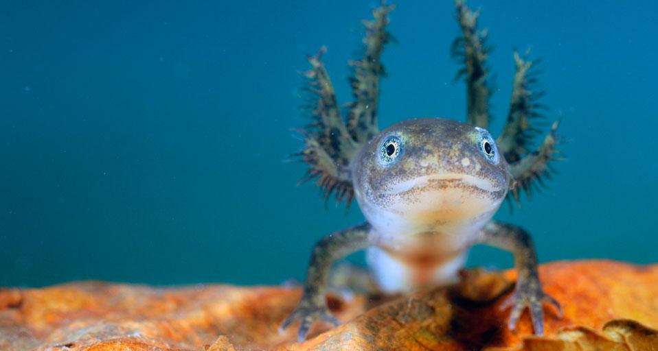 عکسهای جالب-مارمولک اژدها ماهی